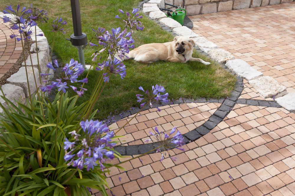 Auch der Hund fühlt sich pudelwohl: Angrenzend an die gepflasterte Fläche liegt er auf dem Gras.