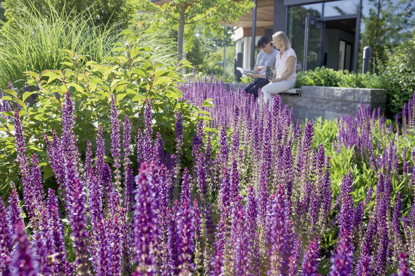 Ein lila Blumenbeet als Gestaltungselement im Ideengarten.